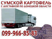 Картофель оптом Сумы. Доставка по Донецкой области