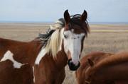 лошадки разного возраста и масти , есть пегие.