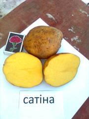 продам картофель 0, 60 грн/кг