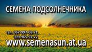 продам семена подсолнечника pioneer, syngenta 150$ 0999659222