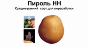 Пироль- чипсовый картофель
