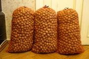 Вкусные грецкие орехи 50кг Киев