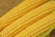 Кукуруза на экспорт