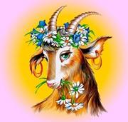 Продається 3-х річна запліднена коза